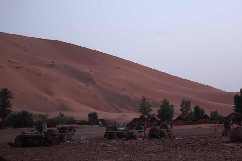 Camellos descansan junto al poblado