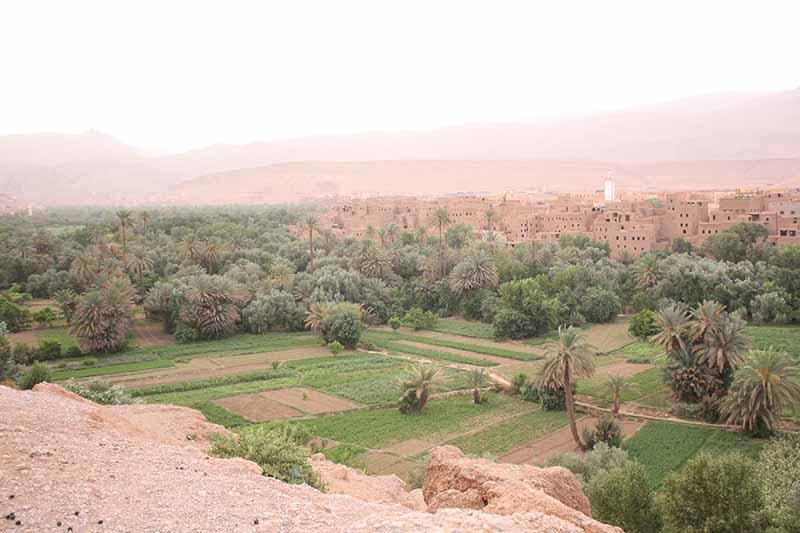 Vistas del palmeral y la kasbahd de Tinerhir