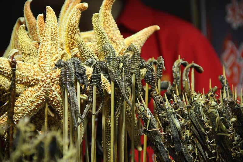 bichos en Wangfujing